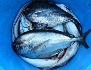 Primerna kuhinja za pripravo rib
