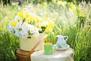 skodelice za čaj