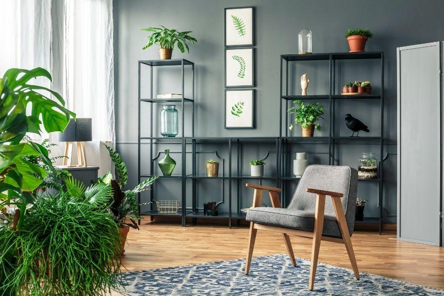 sobne-rastline-2